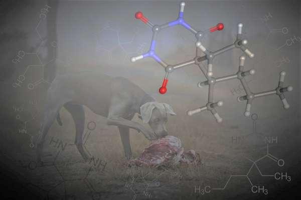 canine pesticide toxicity